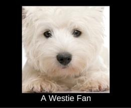 A Westie Fan